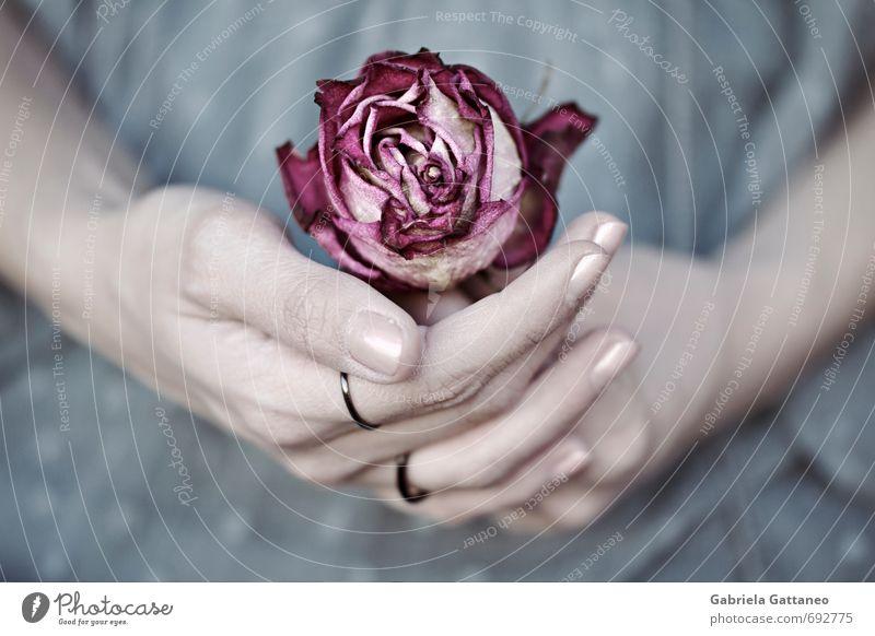 schön Hand Blume Finger Gelassenheit regenarm Fliederbusch