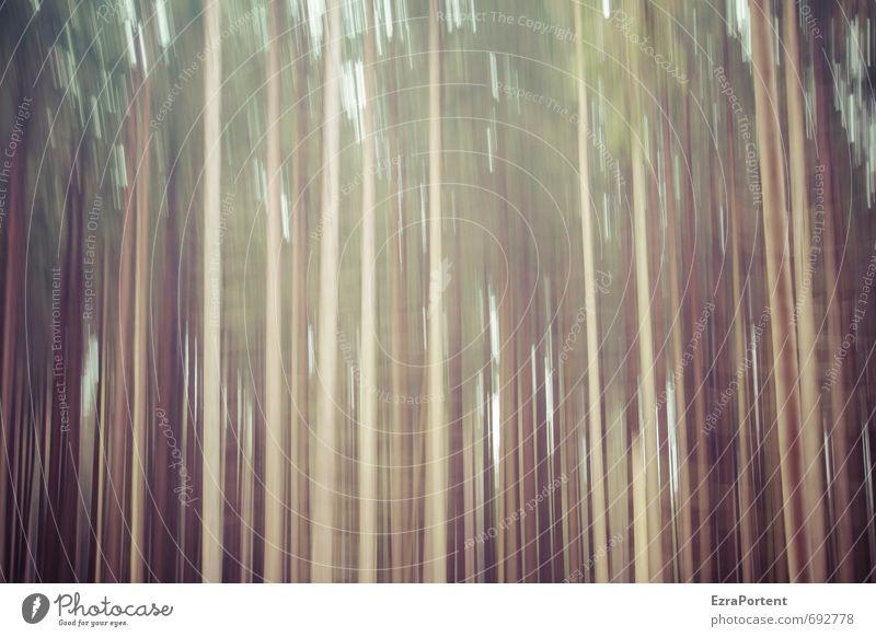 |||||| Natur grün Pflanze Sommer Baum Landschaft Wald Umwelt Herbst Bewegung Frühling Holz natürlich Linie braun Kunst