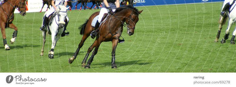 Schräglage Sport Bewegung Pferd Reitsport Weltmeisterschaft Aachen