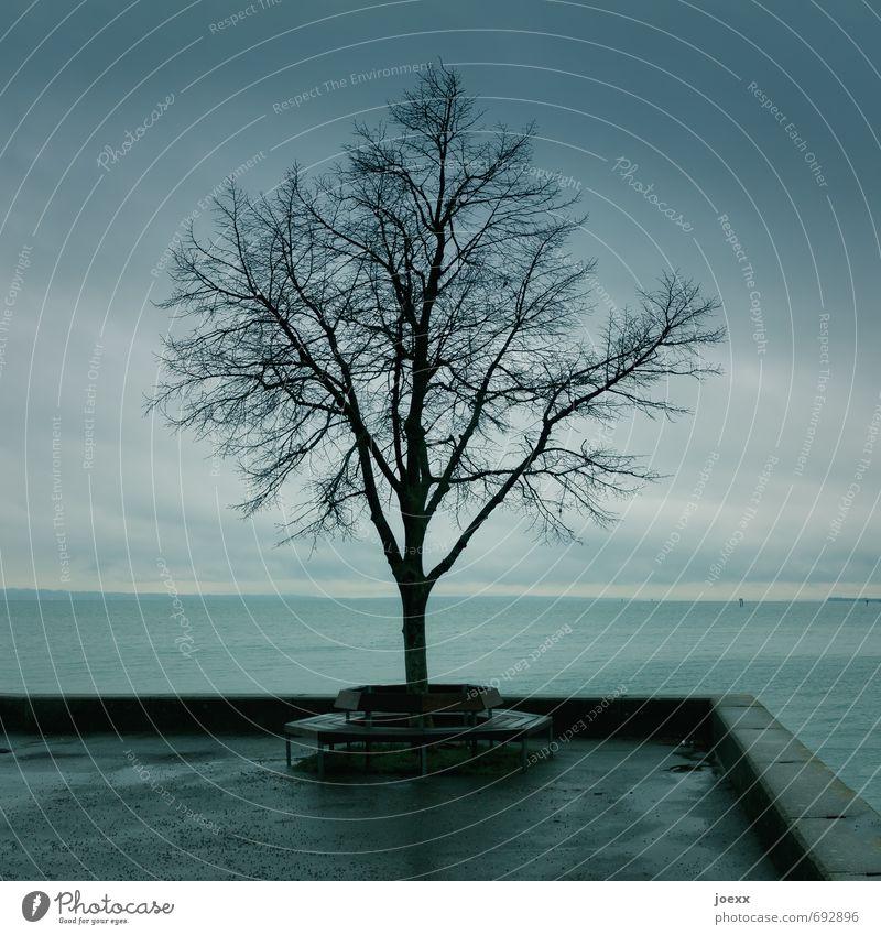Agenten-Treffpunkt Wasser Himmel Herbst schlechtes Wetter Regen Baum Seeufer Bodensee Menschenleer kalt grau schwarz ruhig Sitzgelegenheit Bank Mauer Farbfoto