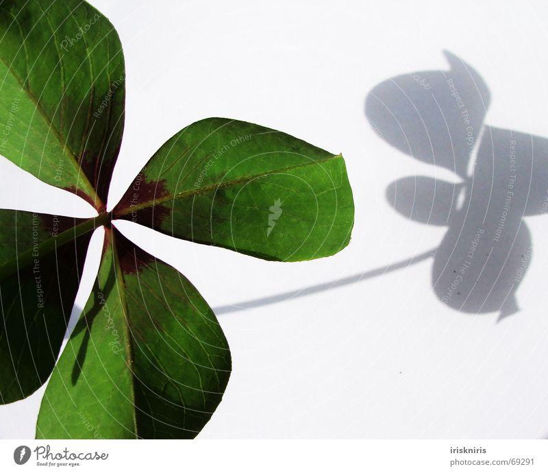 Glück gefunden III Klee grün Japan Zierklee vierblättrig Symbole & Metaphern Wunsch 4blättrig Schatten Nahaufnahme herzform Strukturen & Formen