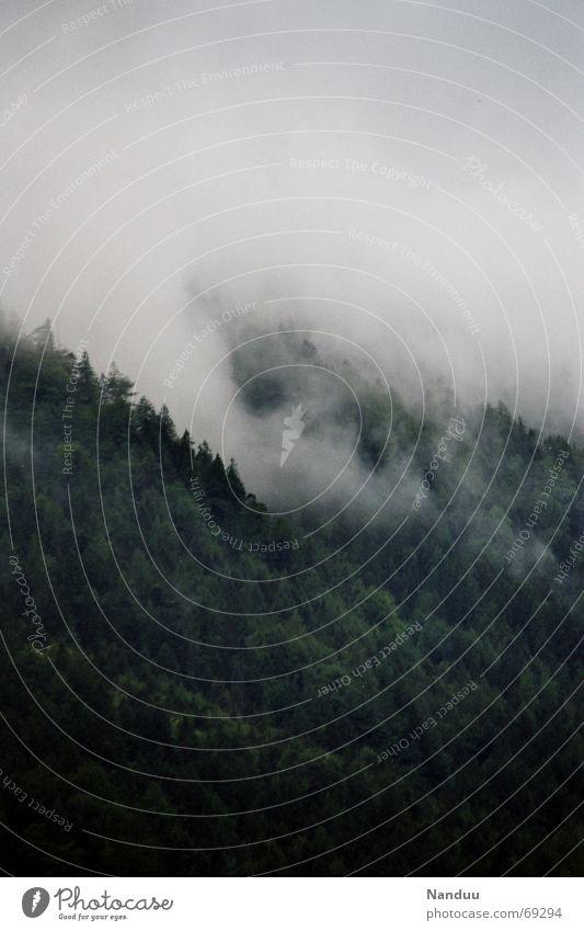 Nach dem Gewitter ruhig Berge u. Gebirge Umwelt Natur Wolken Unwetter Nebel Regen Baum Wald Alpen Kamm dunkel nass Kraft Einsamkeit Angst Nadelbaum Oberbayern