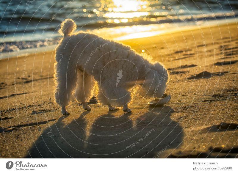 Jax Hund Natur Ferien & Urlaub & Reisen Wasser Sommer Sonne Erholung Meer Landschaft ruhig Tier Strand Umwelt Küste Sand Luft