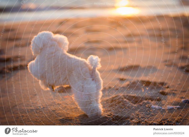 Jump Around Umwelt Natur Landschaft Urelemente Sand Sonne Sonnenlicht Sommer Klima Schönes Wetter Wellen Küste Strand Meer Tier Haustier Hund 1 Bewegung