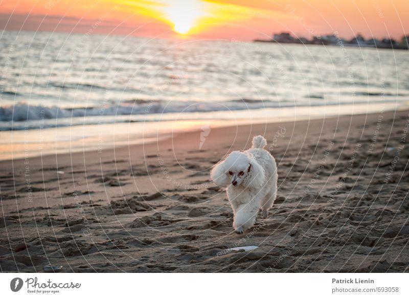 Einzelgänger Hund Himmel Natur weiß Wasser Meer Einsamkeit Landschaft Wolken Tier Strand Umwelt Küste Sand Luft Wetter