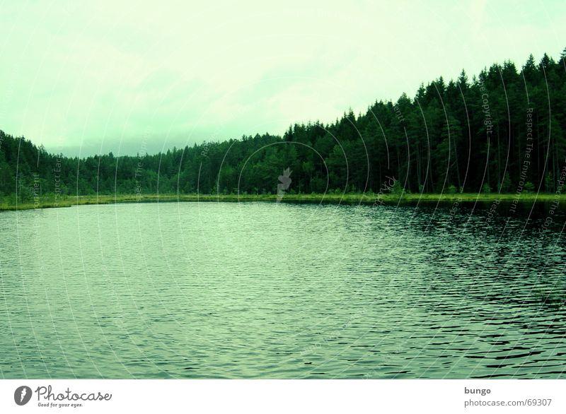 lacus viridis Ferien & Urlaub & Reisen Hügel Unendlichkeit Einsamkeit Sehnsucht Bergsteigen Wiese grün Baum Wald Fichte Österreich Teich See ruhig genießen