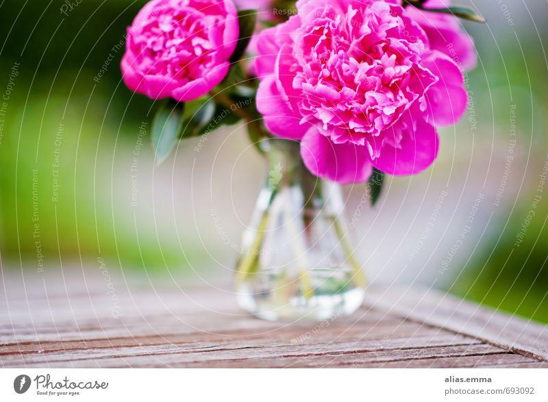 Pfingstrosen Blume Blumenstrauß Blüte rosa Blühend Frühling Vase Garten Dekoration & Verzierung poppig Natur