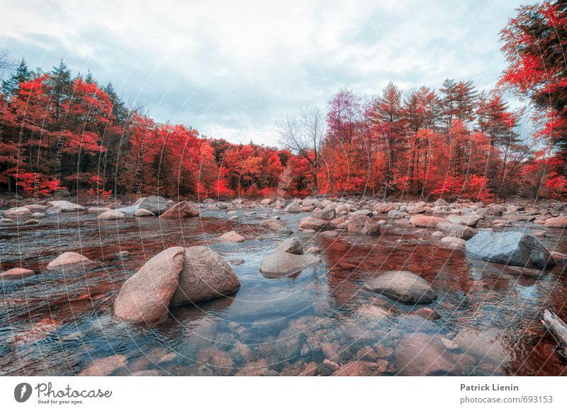Indian Summer V Himmel Natur Ferien & Urlaub & Reisen Pflanze Wasser Baum Einsamkeit Erholung Landschaft Wald Umwelt Herbst natürlich Freiheit Freizeit & Hobby