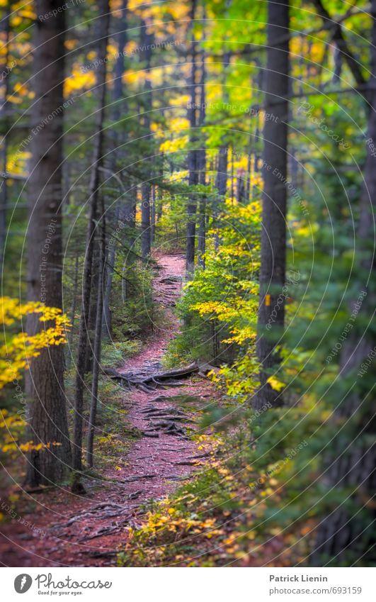 Indian Summer Natur Ferien & Urlaub & Reisen Pflanze Baum Erholung Wald Umwelt gelb Berge u. Gebirge Leben Herbst Wege & Pfade Freiheit Zufriedenheit Erde