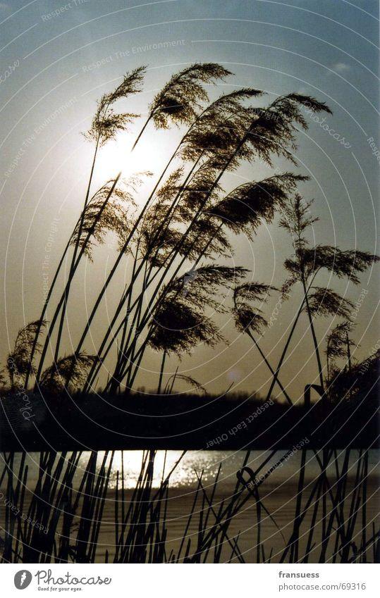 kulki Wasser Sonne Erholung Gras See Küste Wind Schilfrohr friedlich