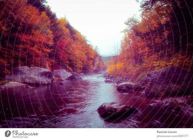 Into The Mystic Natur Ferien & Urlaub & Reisen Wasser Baum Erholung rot Landschaft ruhig Ferne Wald gelb Umwelt Herbst Stein Gesundheit Lifestyle