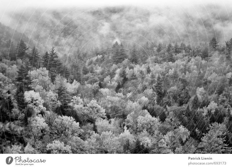 Green Machine Natur Ferien & Urlaub & Reisen Pflanze Baum Erholung Landschaft ruhig Ferne Wald Umwelt Berge u. Gebirge Freiheit Wetter Erde Zufriedenheit