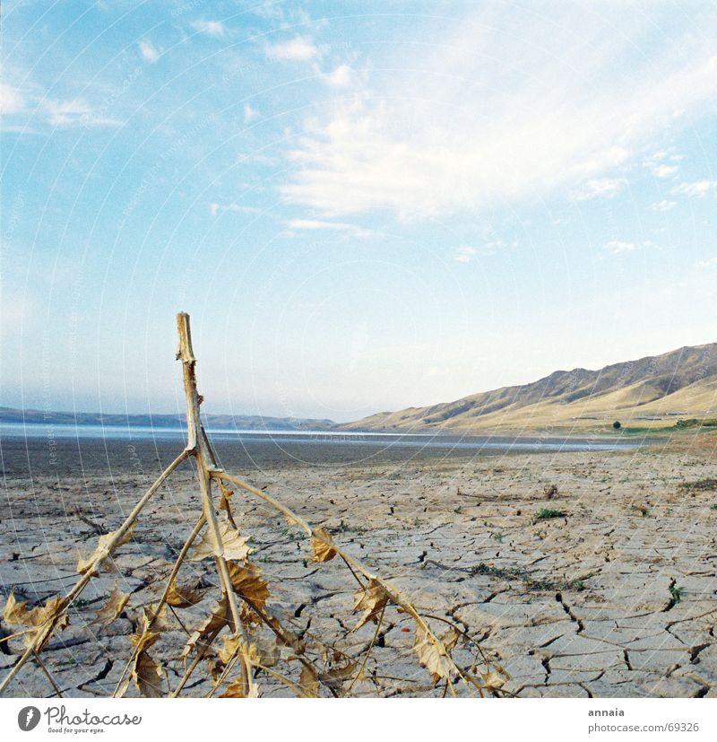 Dürre trocken Blatt Flußbett Himmel Stock gerissen gebrochen ungewiss dry Ast Fluss getrocknet flußtal Tal sky blue blau Ferne Berge u. Gebirge Amerika offen