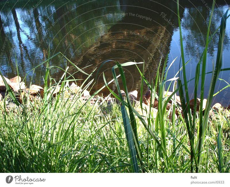 Ufer Wasser Gras Küste