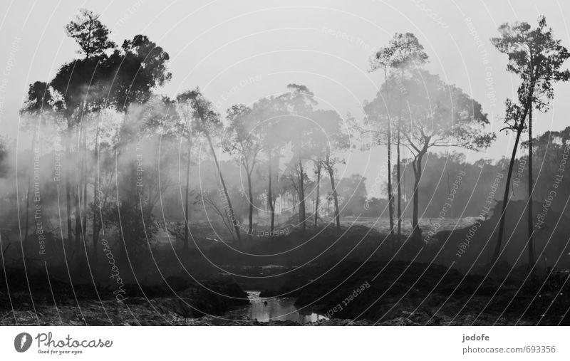 burn down Natur Wasser Pflanze Baum Landschaft Umwelt Erde gefährlich bedrohlich Urelemente Feuer Bauwerk Rauch Baumkrone Urwald brennen