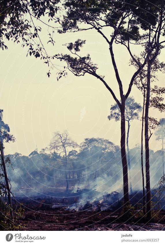 burning land Natur Baum Landschaft Wald Umwelt Tourismus Brand Baumkrone exotisch Urwald brennen Dunst Abgas Baugrundstück fällen zerstören