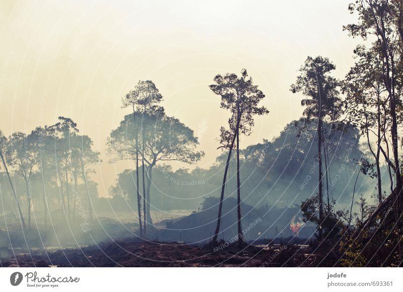 fire Umwelt Natur Landschaft Erde Feuer Baum bedrohlich brennen niederbrennen brandroden Abholzung Rauch Abgas Zerstörung zerstören Endzeitstimmung Neubaugebiet