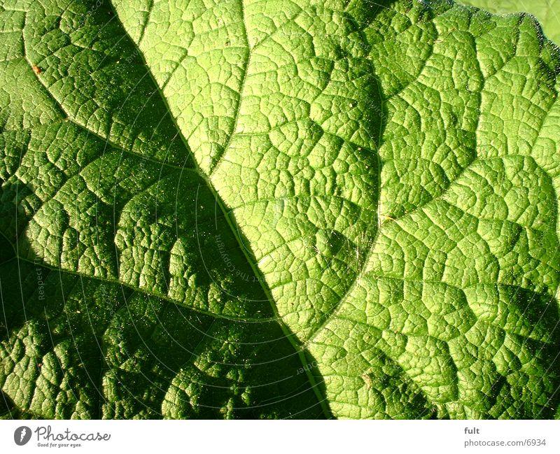 Blatt grün frisch