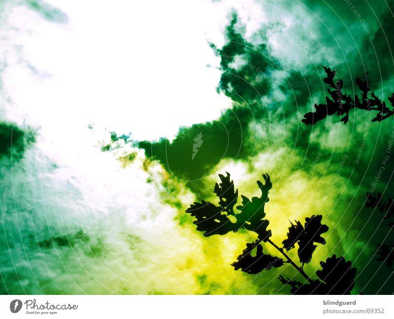 In the Year 2525 grün Blatt Wolken gelb dunkel Regen gefährlich Ast Rauch Ekel Unfall Gift Chemie Filter ungesund