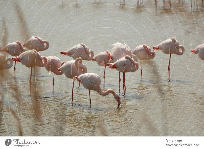 friedliches Beisammensein Natur Wasser ruhig Tier Umwelt Küste See braun rosa Idylle Sträucher Wildtier Ausflug schlafen Pause Seeufer