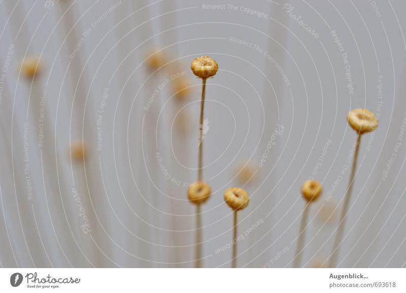 ... alle zusammen ... Natur blau schön Blume ruhig Leben Bewegung Denken außergewöhnlich Freiheit Zusammensein träumen Zufriedenheit gold ästhetisch weich