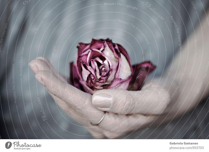 aufgefangen Blume Rose rosa Hand Geborgenheit welk einhändig verdorrt alt trocken festhalten Farbfoto Gedeckte Farben Schwache Tiefenschärfe Zentralperspektive