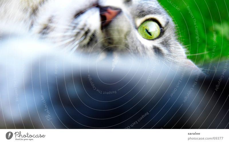 green eye Katze Tier Schnauze Barthaare grün Gras Fell Pfote Unschärfe Aktion Spielen Anspannung stechend schön perfekt Auge Elektrizität Brennpunkt fokusieren