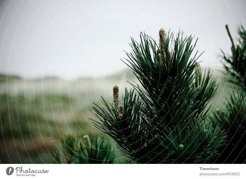 Dänischer Ostergruß. Ferien & Urlaub & Reisen Umwelt Natur Landschaft Pflanze Himmel Baum Sträucher Düne Dänemark Wachstum ästhetisch natürlich grau grün