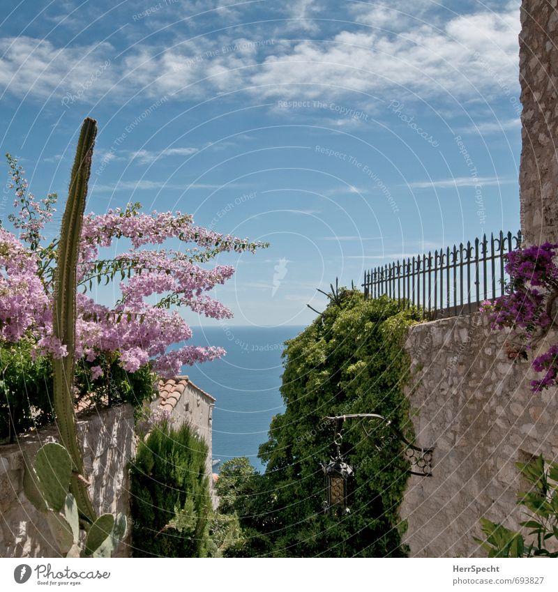 Durchblick Pflanze Himmel Wolken Sommer Schönes Wetter Blüte Grünpflanze Garten Meer Mittelmeer Cote d'Azur Frankreich Dorf Menschenleer Haus Gebäude Mauer Wand