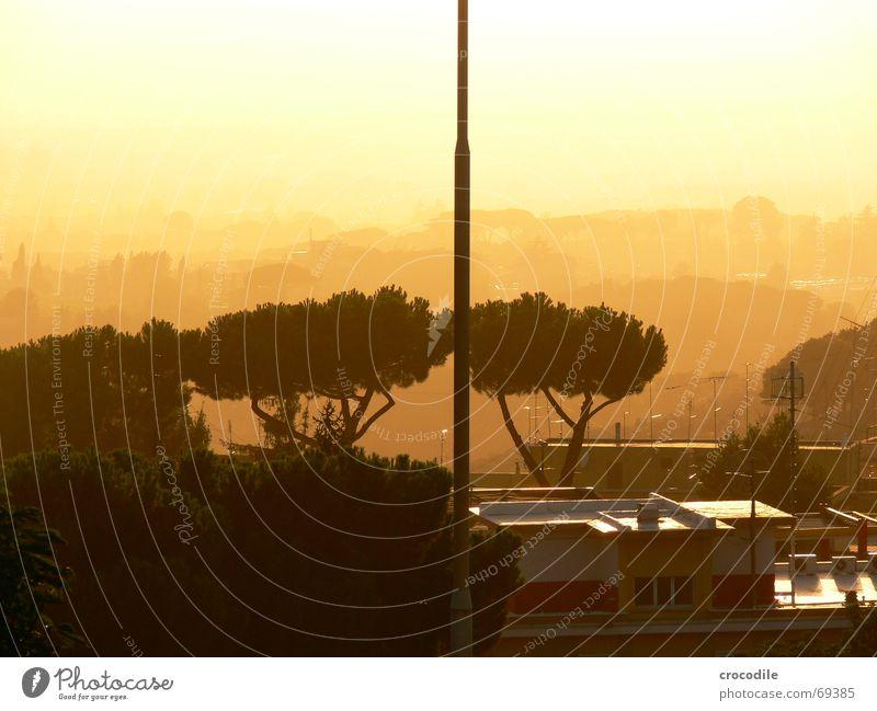 abendsonne Baum Sonnenuntergang Haus Italien Unschärfe Nebel unklar Antenne gegnlicht