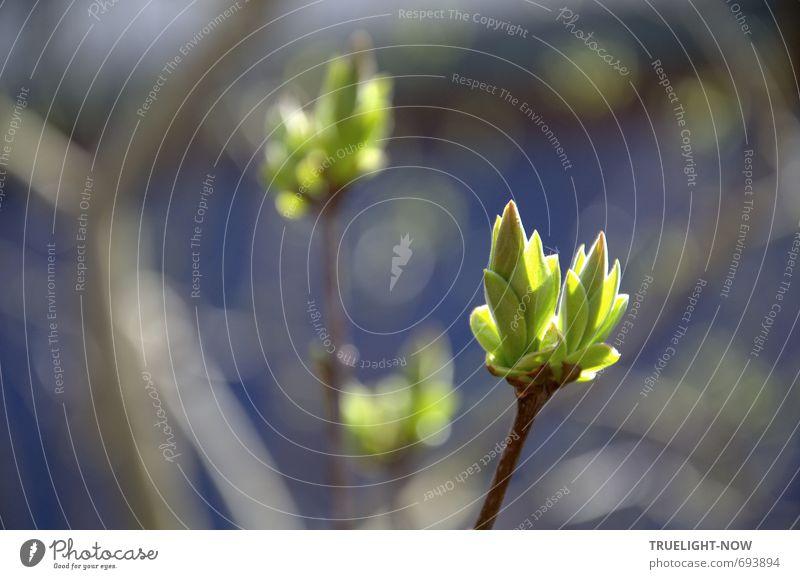Entfaltungsmöglichkeiten   ...gibt's immer Natur Pflanze Urelemente Wasser Sonnenlicht Frühling Schönes Wetter Sträucher Blatt Wildpflanze Knospen Park Wald