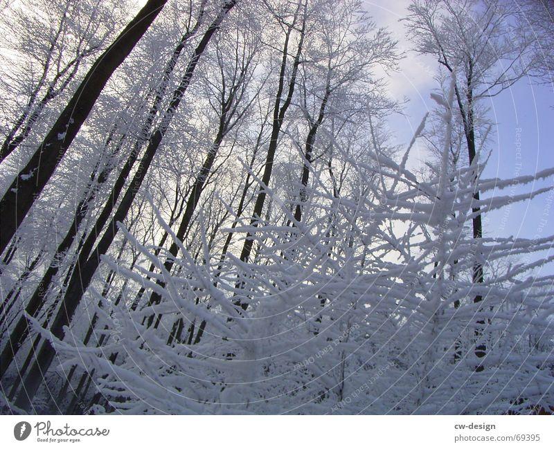 winterliche landschaft I Schneewandern Winter Baum Wald ruhig Erholung Tanne himmelblau Schneelandschaft weiß kalt lichtvoll Gelassenheit Eischnee Nadelwald