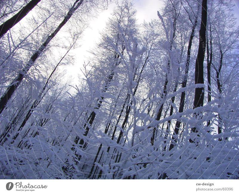 winterliche landschaft II Waldlichtung Winter Baum ruhig Erholung Tanne himmelblau Schneelandschaft Schneewandern lichtvoll Gelassenheit Eischnee Nadelwald