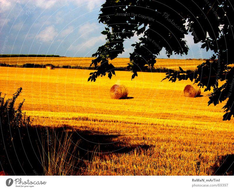 midll summer Kornfeld Feld Sommer Heuballen Strohballen Baum Horizont Ernte Schatten
