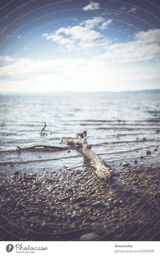 Treibholz Ferien & Urlaub & Reisen Ausflug Freiheit Sonne wandern Umwelt Natur Landschaft Urelemente Luft Wasser Himmel Wolken Sonnenlicht Schönes Wetter See