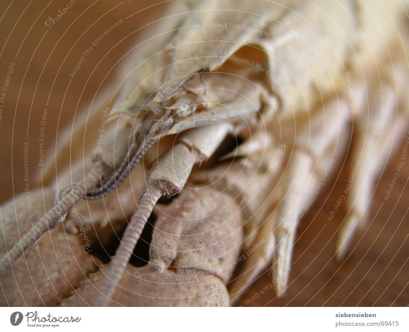 Krebs Wasser Tier Fluss Lebewesen Bach Krebstier Unterwasseraufnahme Krustentier Flußkrebs