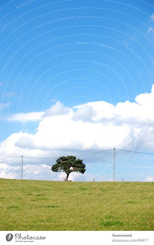 Hängt den Baum auf... Himmel Baum Sonne Sommer Wolken Wiese Landschaft Feld Horizont frei Rasen Strommast Telefonleitung