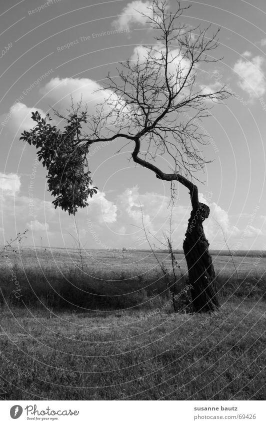split up Baum Licht unheimlich fremd unentschlossen Pflanze Split Reifezeit Schwarzweißfoto Natur Landschaft Schatten black Trennung Leben Tod Wachstum