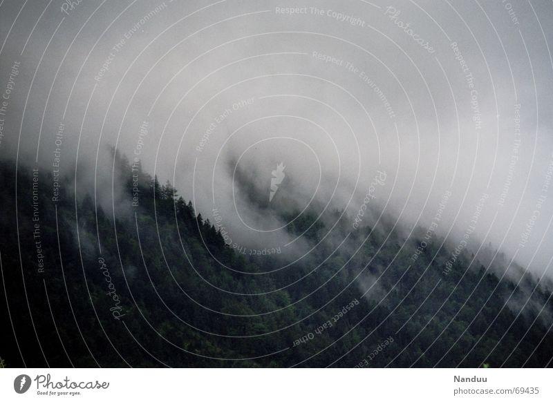 Nach dem Gewitter 2 Berge u. Gebirge Natur Wolken Nebel Regen Wald Alpen Angst Nadelbaum mystisch Bayern Oberbayern Europa Deutschland abgelegen fog mountains