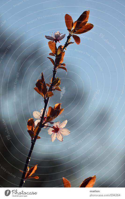 Ave Natur Pflanze Himmel Frühling Schönes Wetter Baum Blatt Blüte Menschenleer blau braun rosa weiß Beginn Zweig Farbfoto Gedeckte Farben Tag Schatten