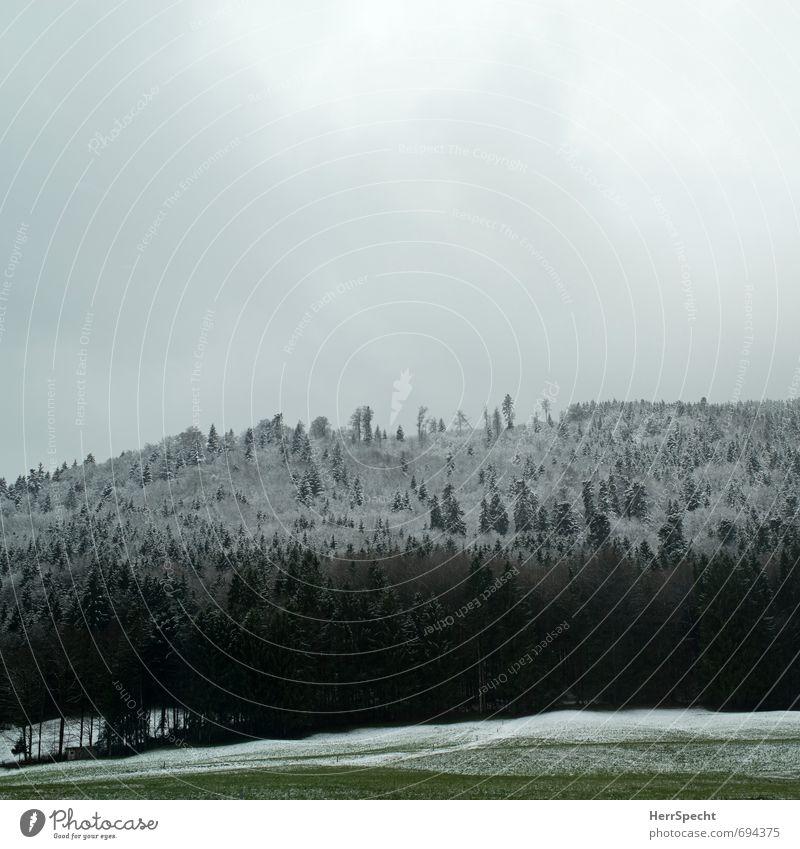 Überzuckert Natur Landschaft Himmel Wolken Winter schlechtes Wetter Schnee Wald grün weiß Winterwald Winterstimmung Zuckerguß Wintereinbruch Nadelwald Baumkrone