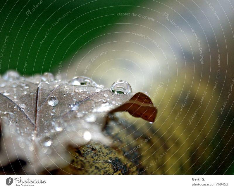 sag mal weinst du etwa, oder ist das der Regen? Blatt Herbstlaub trocken nass Abendsonne Wassertropfen Baum Stab hintergrundunschärfe Tränen