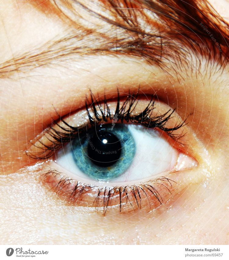 Kann dieses Auge lügen?? Augenbraue Wimpern Pupille blau Haare & Frisuren Regenbogenhaut Detailaufnahme