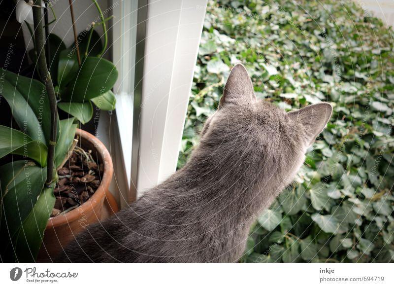 total neugierig Katze Sommer Tier Fenster Gefühle Frühling Garten Freizeit & Hobby Wohnung Lifestyle Häusliches Leben beobachten niedlich Neugier Fell entdecken