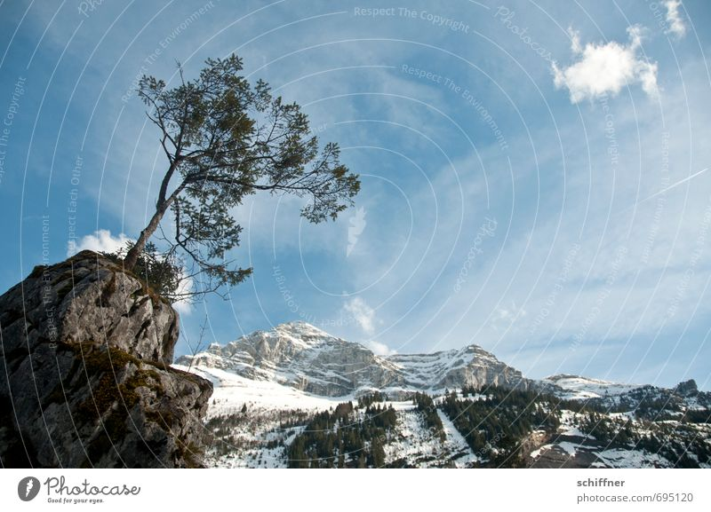 Sturm von links Umwelt Natur Landschaft Pflanze Himmel Wolken Winter Klima Klimawandel Wetter Schönes Wetter Eis Frost Hagel Schnee Felsen Alpen