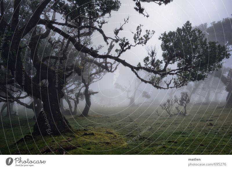 sagenhaft Natur Landschaft Pflanze Frühling Klima Wetter Nebel Regen Baum Gras Moos Farn Wiese Wald gruselig natürlich braun grau grün Volksglaube unheimlich