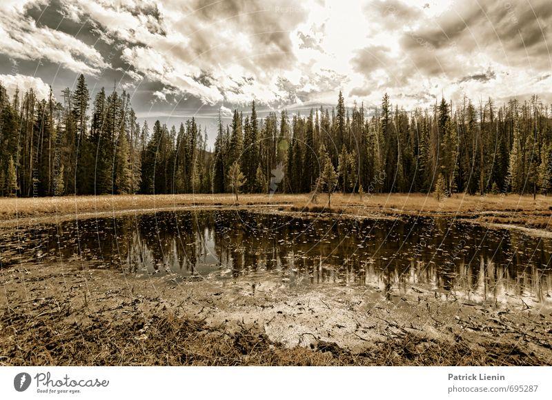 Goldener Oktober Himmel Natur Ferien & Urlaub & Reisen Pflanze Wasser Sonne Baum Erholung Landschaft ruhig Wolken Ferne Wald Umwelt Berge u. Gebirge Herbst