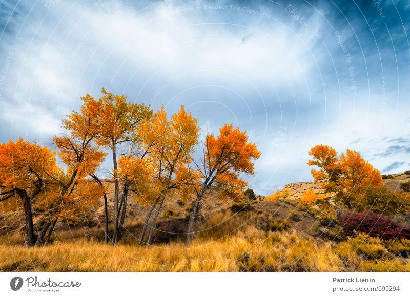 Herbstfarben Himmel Natur Pflanze Farbe Sonne Baum Erholung Landschaft ruhig Wolken Ferne Wald Umwelt Freiheit Wetter