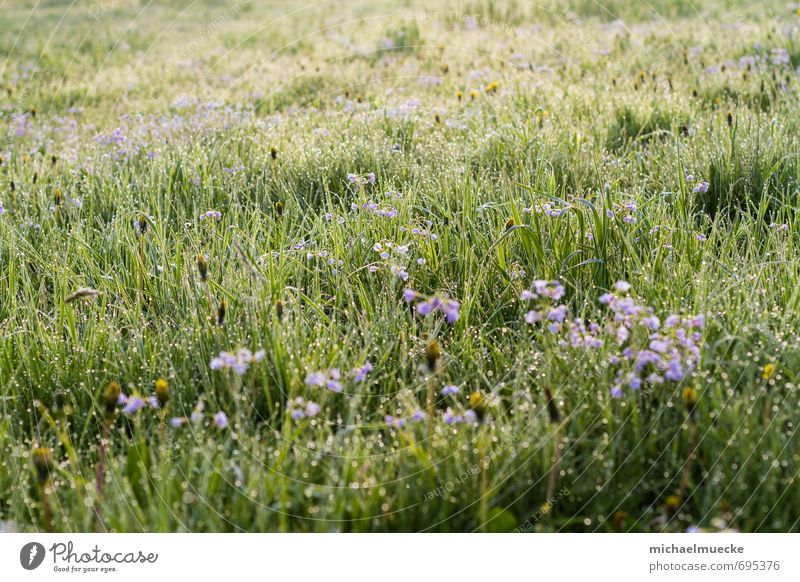 Meadow in the morning harmonisch ruhig Natur Landschaft Pflanze Frühling Gras Blüte Grünpflanze Wiese Feld Blühend frisch hell positiv schön grün Stimmung
