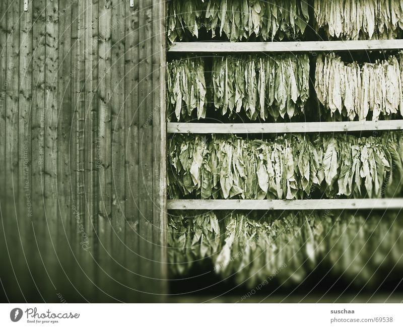 offenes scheunentor Scheune Holz Tabak getrocknet Balken hängt runter aufgehängt tabakpflanze grünes zeug